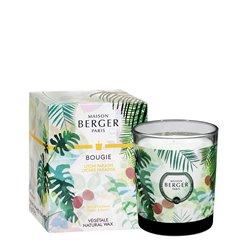 Bougie 240gr Litchi paradis - Maison Berger